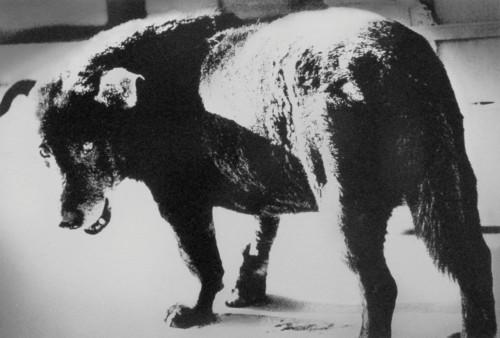Stray Dog Daido Moriyama