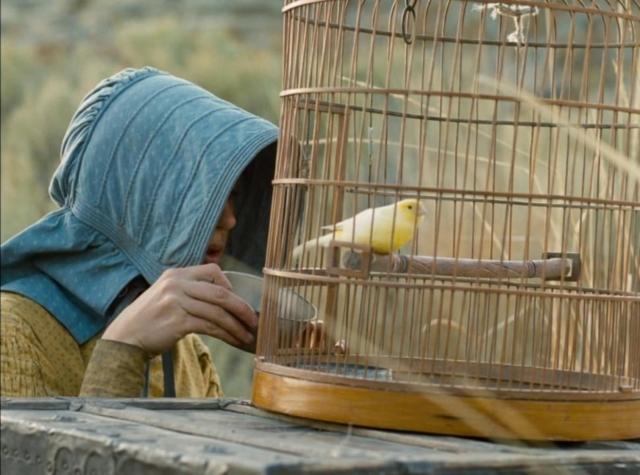 Nourrir les oiseaux domestiques dans La Dernière Piste