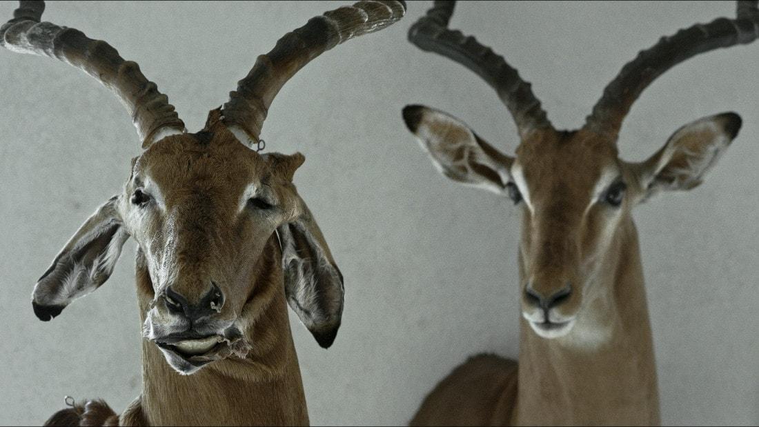 Des animaux empaillés dans Animus Animalis de Aistė Žegulytė