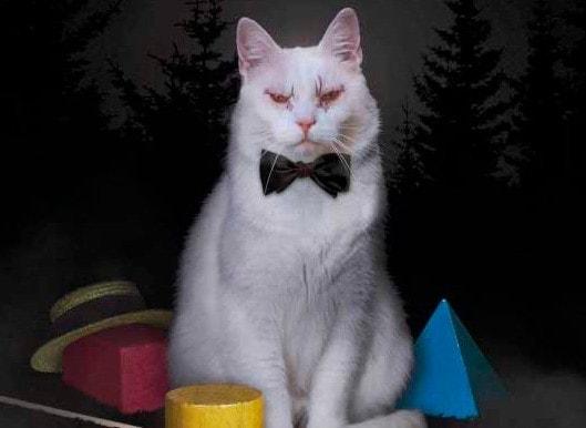 Le chat dans koko di koko da