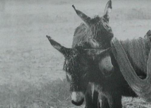 Deux ânes dans Le Bled de Jean Renoir