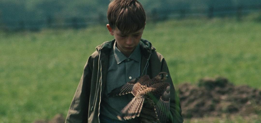 Billy (David Bradley) avec son faucon dans les champs dans Kes