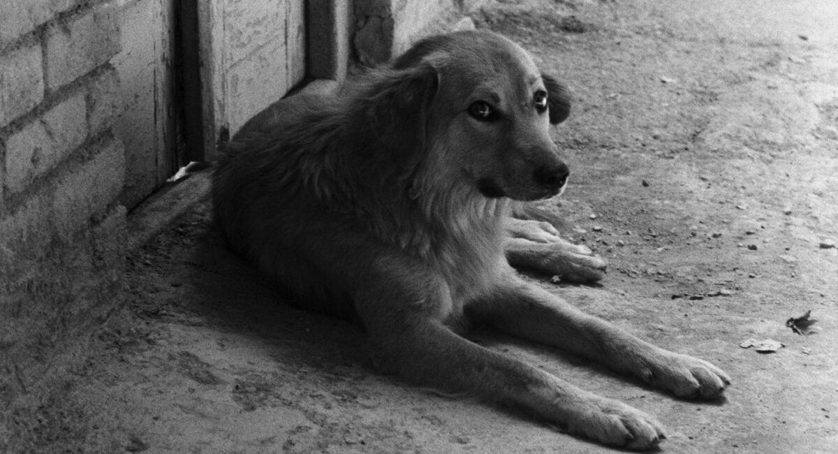 Le chien qui fait peur à l'enfant dans Le Pain et la rue